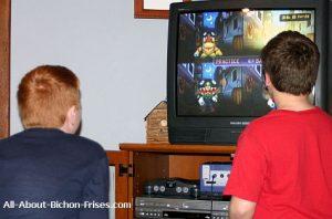 kids watching Bichon Frise videos