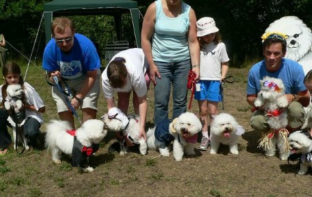Photo of dog birthday party with Bichon Frises