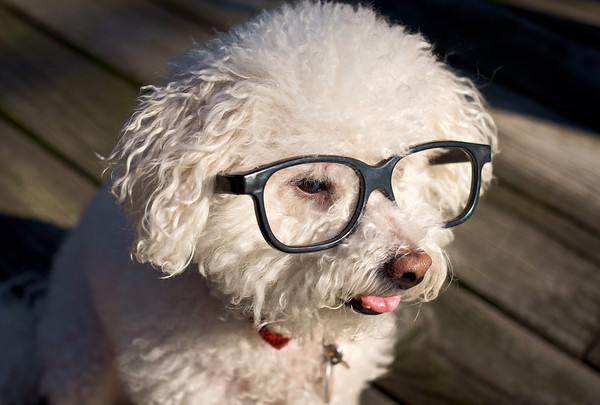 Eye Care for Dogs