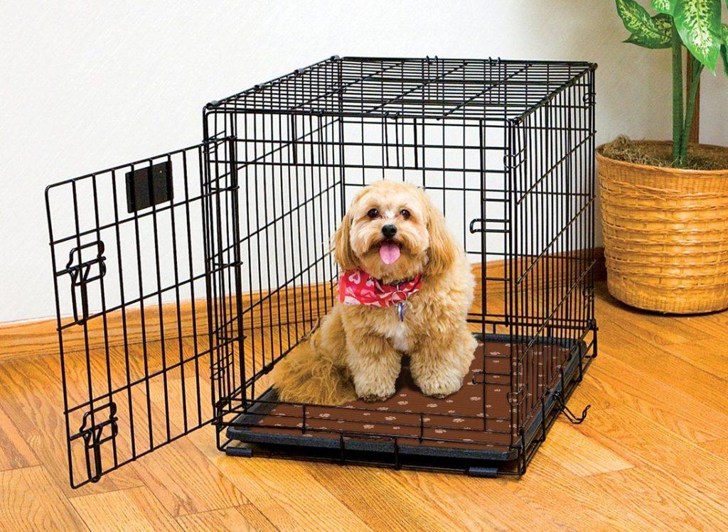 Crate training a Bichon Frise puppy