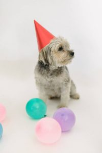 Cute little dog at his dog birthday party