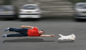 Man being dragged by a Bichon Frise on a leash