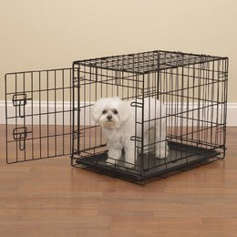 Bichon Frise in metal dog crate