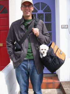 Bichon Frise puppies are just the right size for a dog carrier.