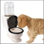 Puppy drinking from dog toilet bowl.