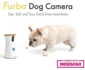 Furbo Dog Camera and pug dog