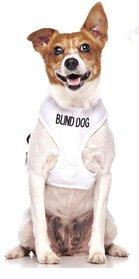Blind dog vest, one of important blind dog accessories
