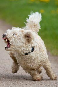aggressive dog behavior body language
