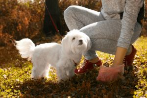Clean up right away to avoid your dog eating poop.