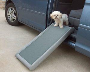 PetSafe Solvit Half Ramp with Bichon Frise dog