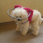 a halo is one of blind dog accessories needed