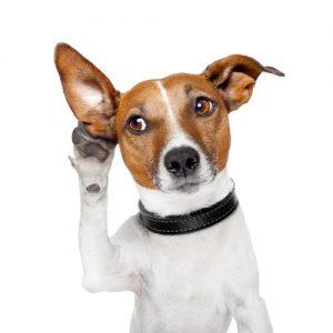 dog hearing loss