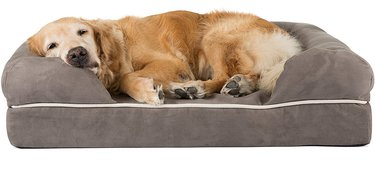 Dog arthritis treatment includes a nice supportive bed.