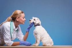 Vet patting a white dog under its chin.