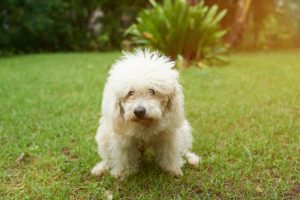 If your dog has a canine urinary tract infection, she will strain when trying to urinate.