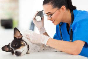 canine skin cancer