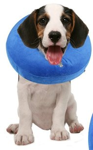 MIDOG Collar, used to prevent licking and biting after dog neutering