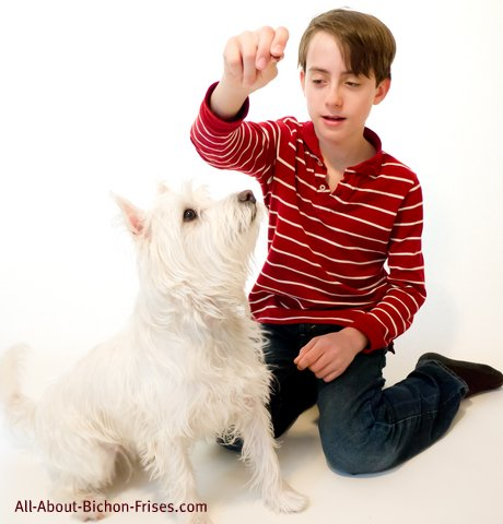 Young boy in red shirt giving white dog a training treat
