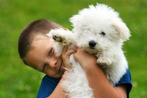 Little boy with cute bichon frise puppy